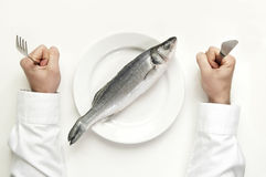 Fish diet from top view. Stock Image