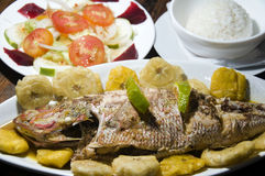 Fish dinner tostones corn island nicaragua Royalty Free Stock Photography