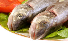 Fish dish. Close-up image of two raw fish on a plate Royalty Free Stock Images