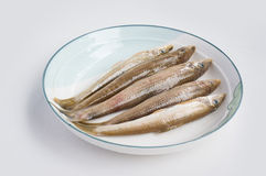 Fish in disk Royalty Free Stock Image