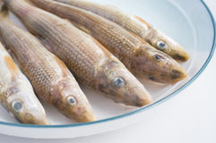 Fish in disk Royalty Free Stock Photography