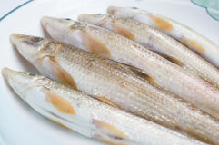 Fish in disk Royalty Free Stock Photo