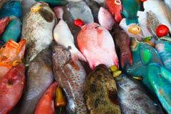 Fish on dislay at fishmarket Stock Image