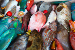 Fish on dislay at fishmarket Royalty Free Stock Photo