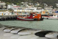 Fish on display. At a fish market in Cape Town, with fishing vessels in the background Royalty Free Stock Image