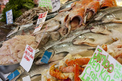 Fish on display at fish market royalty free stock images