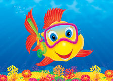 Fish diver. High resolution image for your design and wallpaper Royalty Free Stock Images