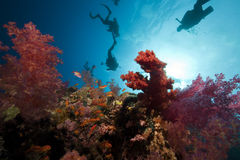 Fish,divers and ocean. Taken in the Red Sea Royalty Free Stock Photography