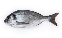 Fish dorado isolated on white Royalty Free Stock Photo