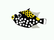 Fish with dots. An ocean fish with dots Stock Photography