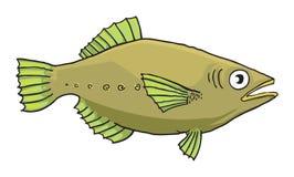 Fish. Drawing of Green fresh water fish Stock Photo