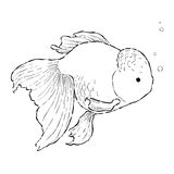 Fish drawing Royalty Free Stock Photo