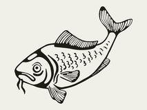 A fish.  drawing. Sea fish. isolated  graphic drawing Stock Photography