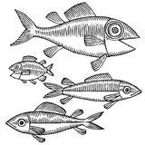 Fish drawing variant. Four black and white fishes drawing Royalty Free Stock Image