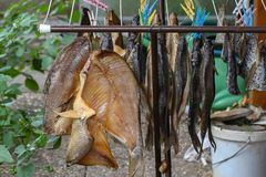 Fish are dried in the fresh air. / Dry fish Royalty Free Stock Photo