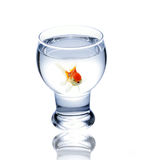 Fish in drinking glass Royalty Free Stock Photos