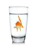 Fish in drinking glass Royalty Free Stock Images