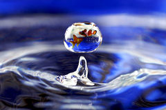 Fish in drop. Edit by photoshop. Fish in drop Royalty Free Stock Images
