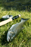 Fish on dry land Royalty Free Stock Image