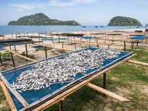Fish dry in the sun. And sea breeze Royalty Free Stock Photography