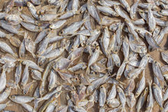 Fish dry. Texture of small fish dried it is a keeping food. The warm sun in morning royalty free stock photo