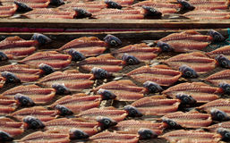 Fish drying. On the beach in Nazare - Portugal Royalty Free Stock Images