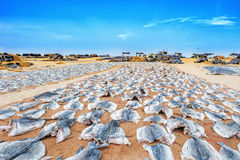 Fish drying on the beach Royalty Free Stock Image