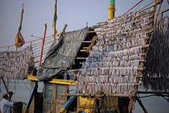 Fish drying on board Stock Photo
