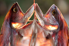 Fish drying in market Stock Images