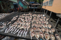 Fish drying on the net in Koh Panyee village Royalty Free Stock Images