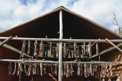 Fish drying outdoors Royalty Free Stock Image