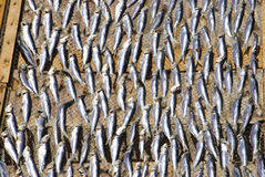Fish drying outside Stock Images