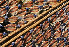 Fish drying in the sun Stock Photo