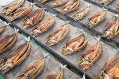 Fish drying in the sun, Banda Islands, indonesia Royalty Free Stock Image