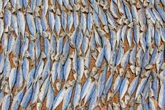 Fish Drying In The Sun royalty free stock photos