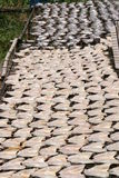 Fish drying in the sun, Thailand. Fish drying in the sun, Bangkok, Thailand Stock Images