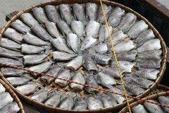 Fish drying in the sun, Thailand. Royalty Free Stock Images