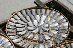 Fish drying in the sun, Thailand. Stock Images
