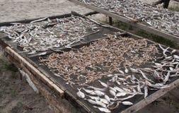 Fish drying Royalty Free Stock Photo