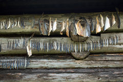 Fish drying. Traditional way to conserve food - fish drying Royalty Free Stock Photos