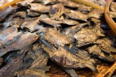 Fish drying under the sun royalty free stock photos