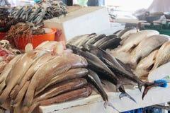 Fish at the Dubai fish market Royalty Free Stock Images