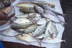 Fish at Dubai Fish Market Stock Photos