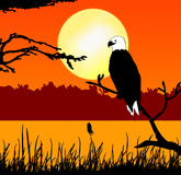 Fish eagle in sunset. Illustration of a fish eagle on a branch at a lake in sunset scene Stock Photography