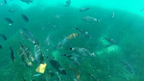 Fish eating frenzy shot underwater stock footage