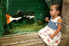 Fish Encounter Stock Photo