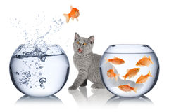 Fish escape concept Royalty Free Stock Photos