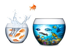 Fish escape to freedom concept royalty free stock image