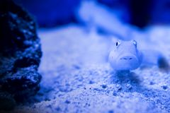 Fish exotic aquarium animals nature. Water Royalty Free Stock Images