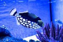 Fish exotic aquarium animals nature. Water Royalty Free Stock Image